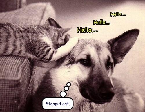 hello brains Cats funny - 7710773760