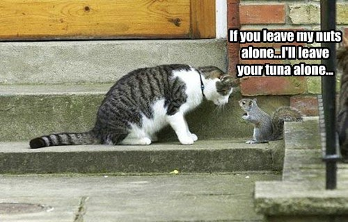 If you leave my nuts alone...I'll leave your tuna alone...