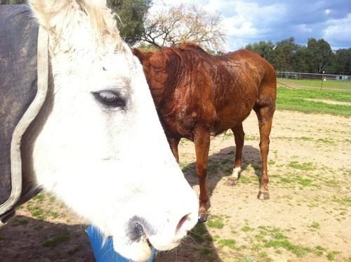 photobomb,horses,funny