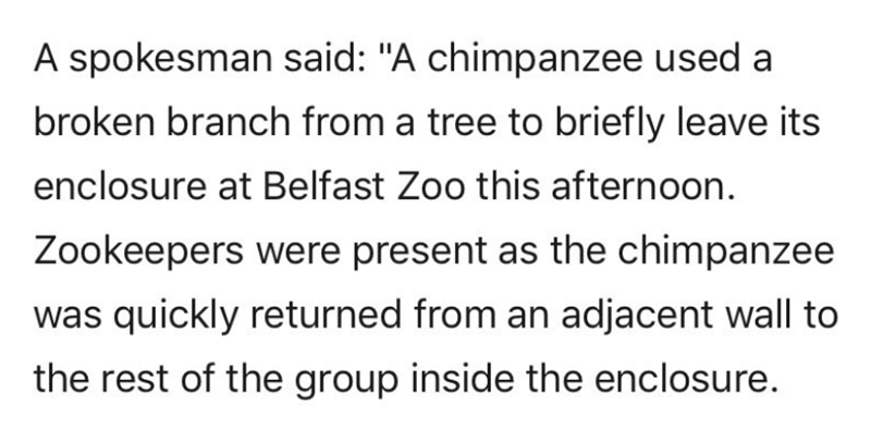 chimpanzee ladder escape zoo belfast tree branch - 7712517