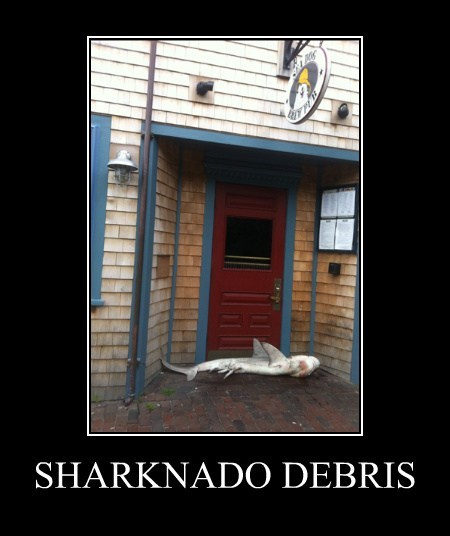 bar sharknado wtf shark funny