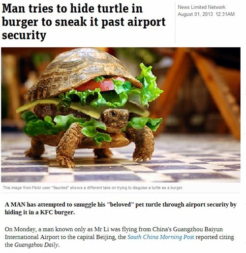 news,airport,turtles,what,Probably bad News,funny,weird,animals,fail nation,g rated