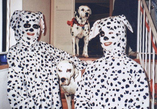 dogs wtf people costume funny - 7712787200