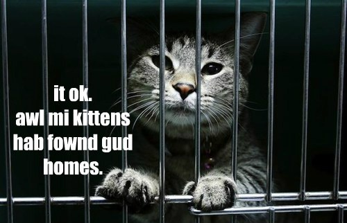 it ok. awl mi kittens hab fownd gud homes.
