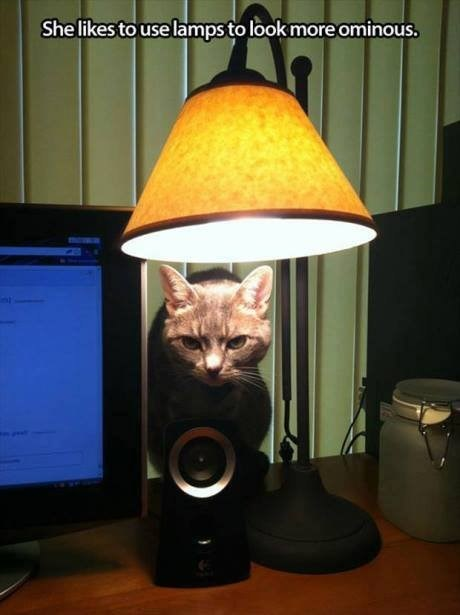lamp ambiance ominous Cats funny - 7713032704