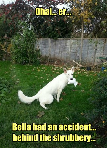 Ohai... er... Bella had an accident... behind the shrubbery...