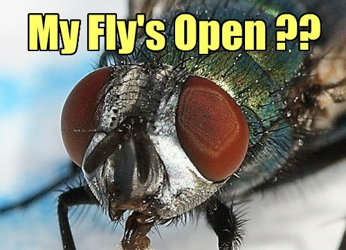 My Fly's Open ??