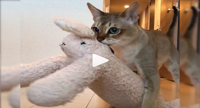 funny cat videos videos cute cute cats lol funny cats cat videos Cats funny - 7714053
