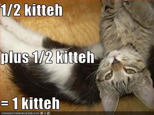 1/2 kitteh plus 1/2 kitteh = 1 kitteh