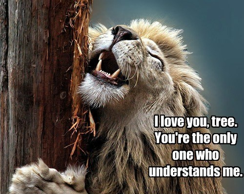lion tree understand funny - 7716973568