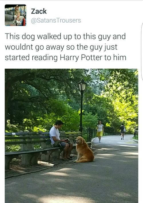 wholesome pic of guy reading book to a dog at a park