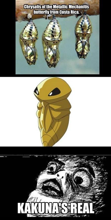 Pokémon IRL kakuna - 7717256704