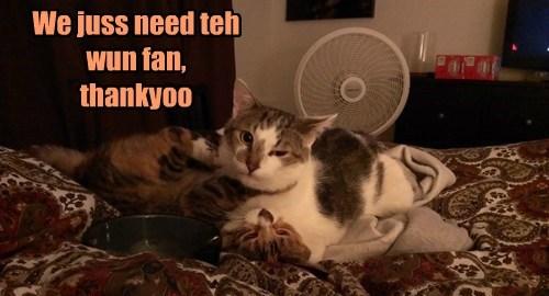 gawk,fan,funny