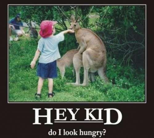 wtf kangaroo sexy times funny - 7717302272