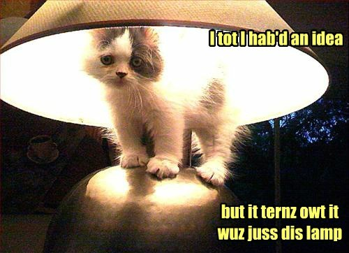 lamp kitten light funny - 7717465600