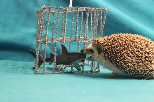 cage shark week hedgehog funny - 7717499648