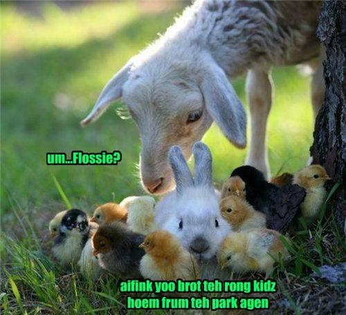 goat chicks kids bunny funny - 7717960704