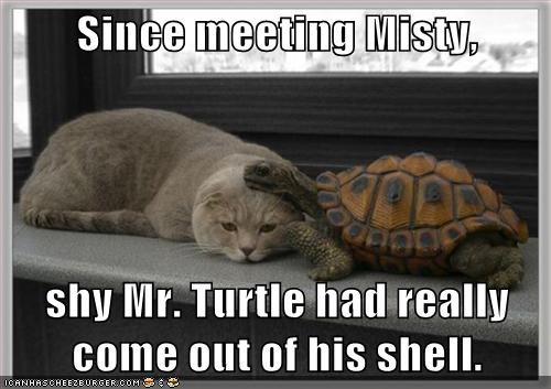 shy cute shell turtle - 7718801408