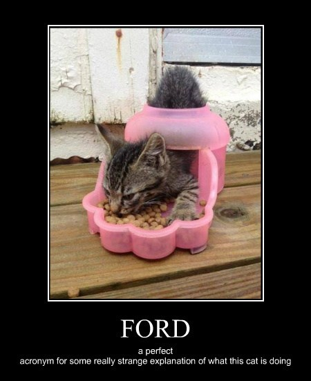 FORD a perfect acronym for some really strange explanation of what this cat is doing