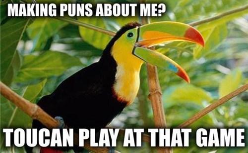 games,toucan,pun