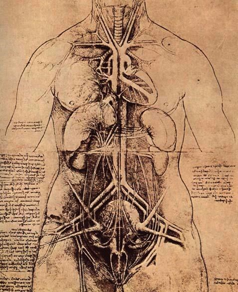 leonardo da vinci anatomy art science - 7719798784