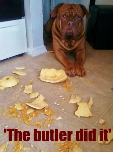 pumpkins detective messy butler funny - 7719915264