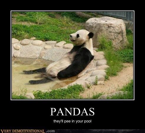 wtf,pee,panda,pool