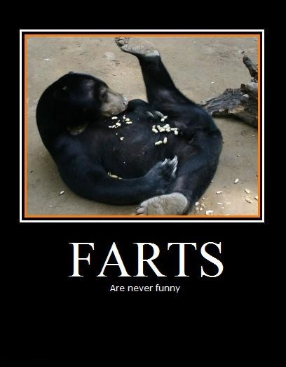 farts zoo bear funny animals - 7719984384