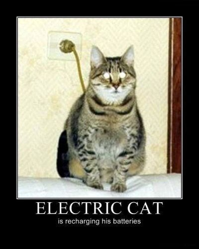 plug cat electric funny animals - 7719987456