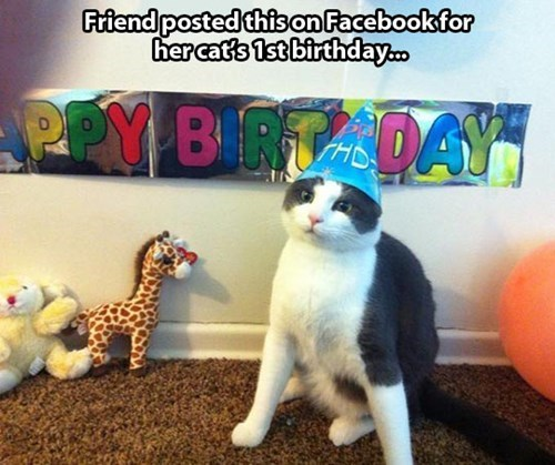 grey and white cat wearing blue party hat in front of happy birthday banner