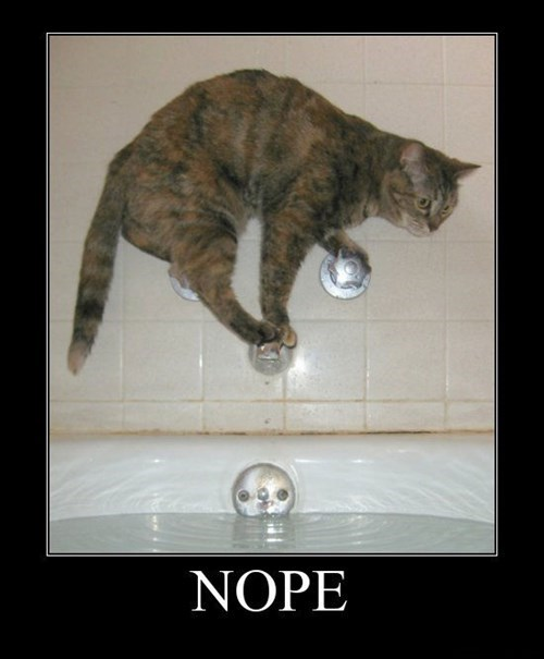 cat water nope bath funny - 7720053248