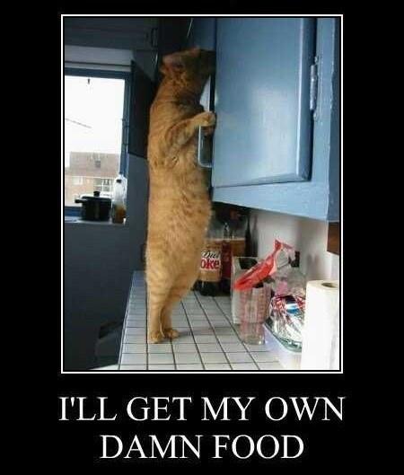 greedy food Cats funny animals - 7720122112