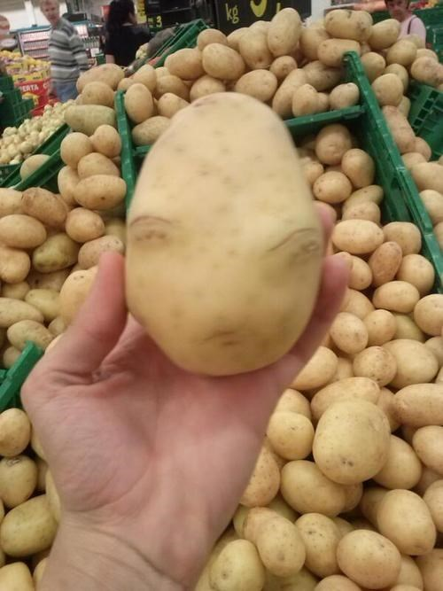 wtf spuds funny potatoes - 7720154112