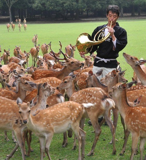My Horn Brings All the Deer to the Yard