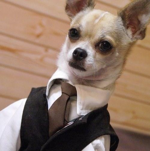 dapper cute suit - 7720332800