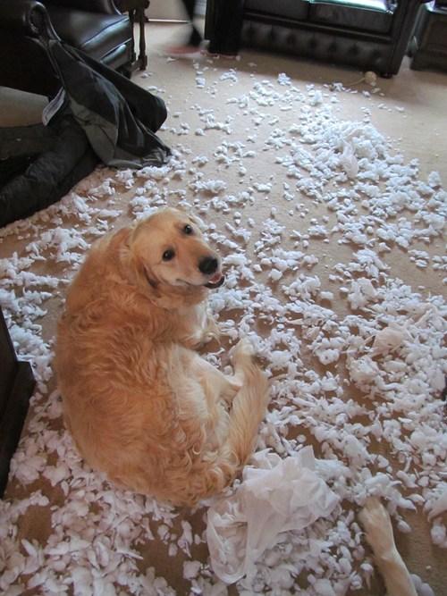 bed destructive mess funny - 7720537344