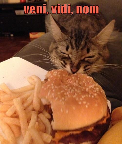 Cheezburger Image 7720853760