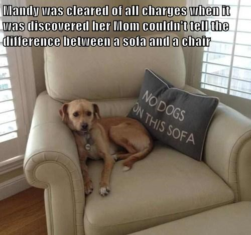 chair technicality sofa funny - 7721288448
