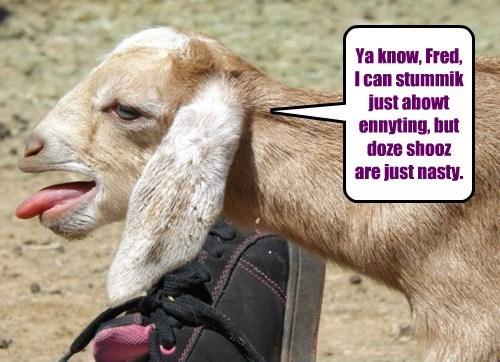 shoes feet goats funny stinky - 7721643776