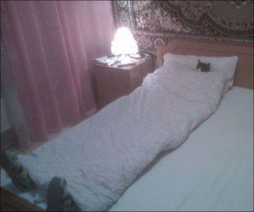 cat bed big funny - 7722090496