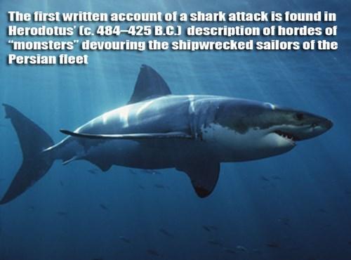 history shark funny g rated School of FAIL - 7722345472