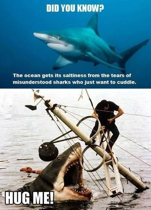 Sad shark week sharks hugs funny - 7722416128