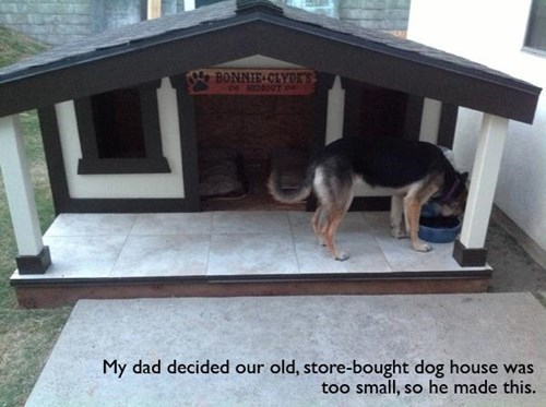 awesome dog house