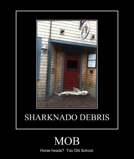 mob horses sharks funny - 7722505216