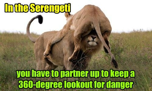 In the Serengeti you have to partner up to keep a 360-degree lookout for danger