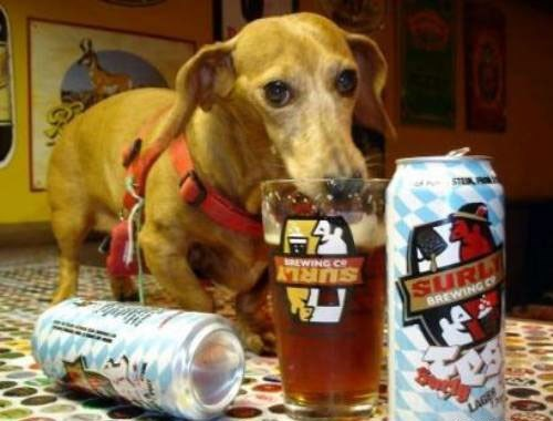 beer crunk critters dogs funny - 7722572288