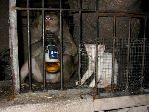 beer cat crunk critters funny - 7722576640
