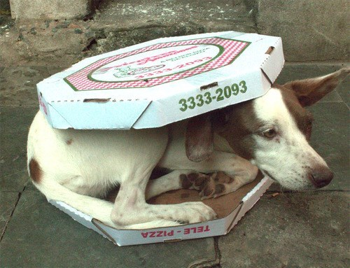 pepperoni pizza box dogs funny - 7722619648