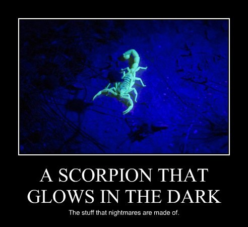 A SCORPION THAT GLOWS IN THE DARK The stuff that nightmares are made of.