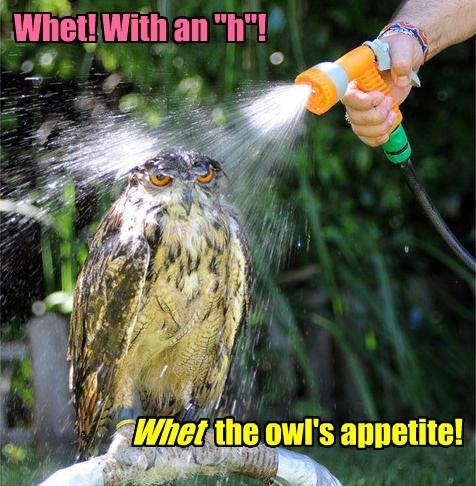 wet spray Owl funny - 7723987968